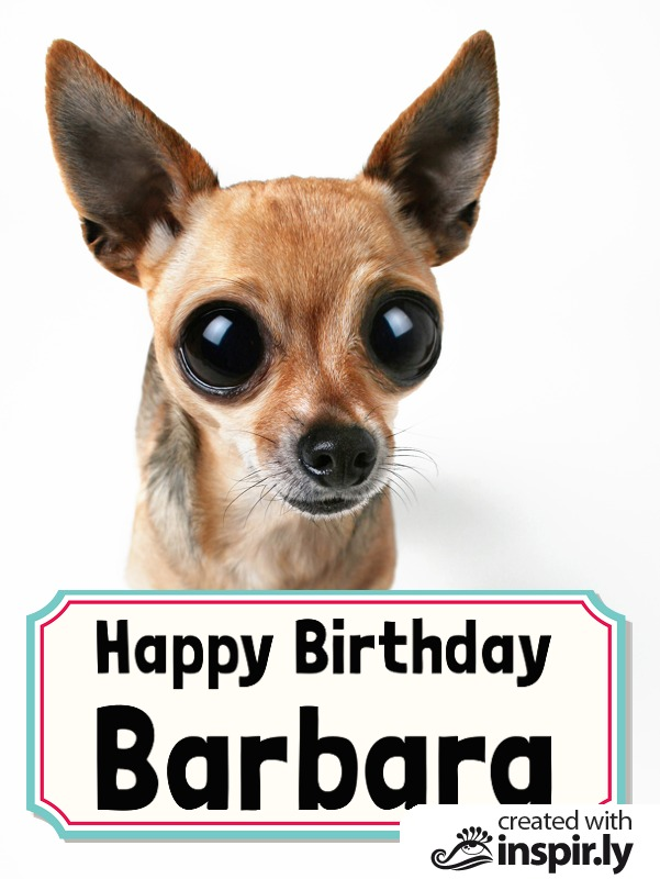 Happy Birthday chihuahua-235240