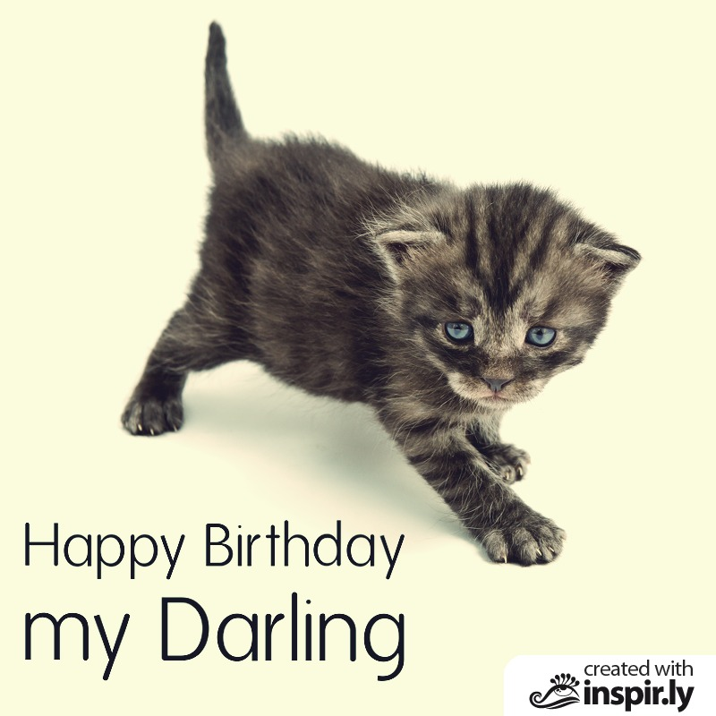 Happy Birthday my darling cat-235246