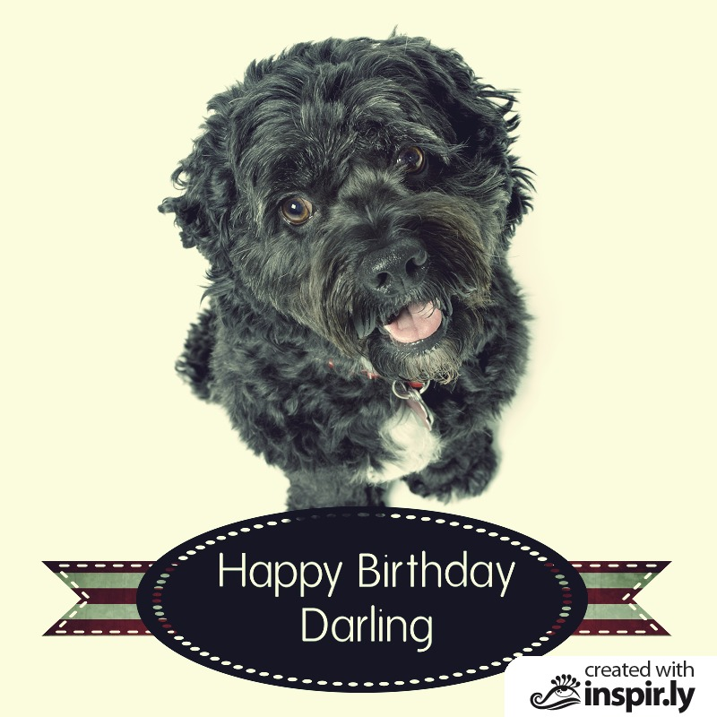 Happy birthday darling dog-235259