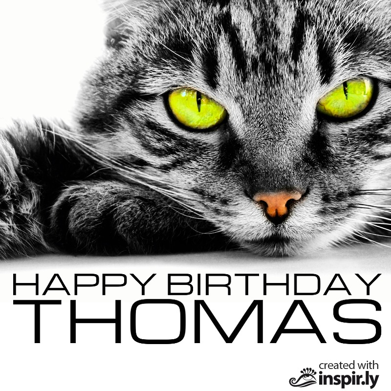 happy birthday cat-235249