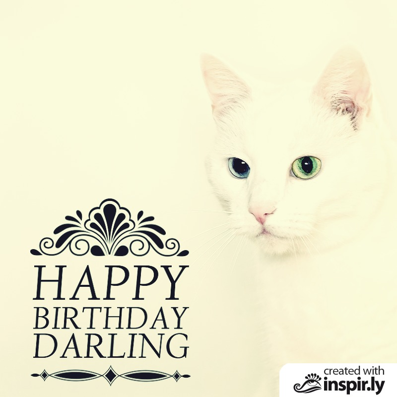 happy birthday darling cat-235247